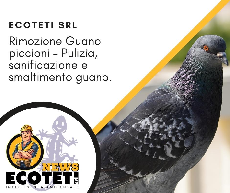 Rimozione guano di piccione - pulizia sanificazione e smaltimento guano di piccione Grosseto - Ecoteti srl